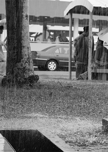 raining-img_7484