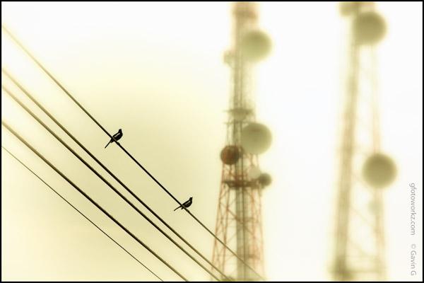 Birds on power line
